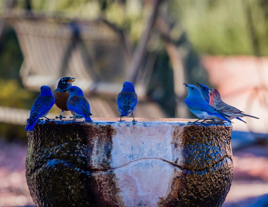 fontaine à oiseaux