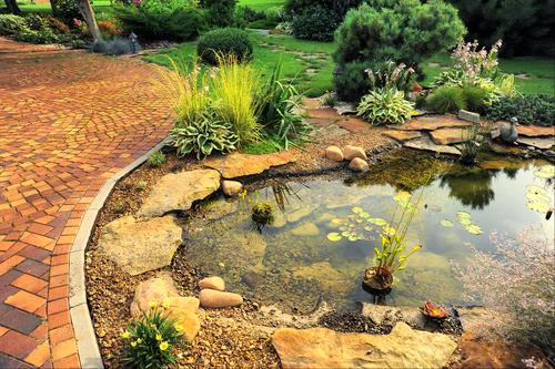 bassin jardin entretien en automne