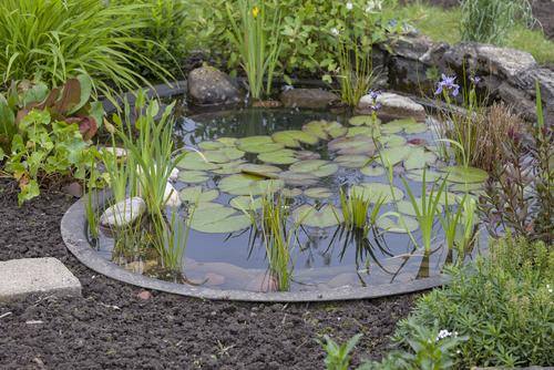 petit bassin