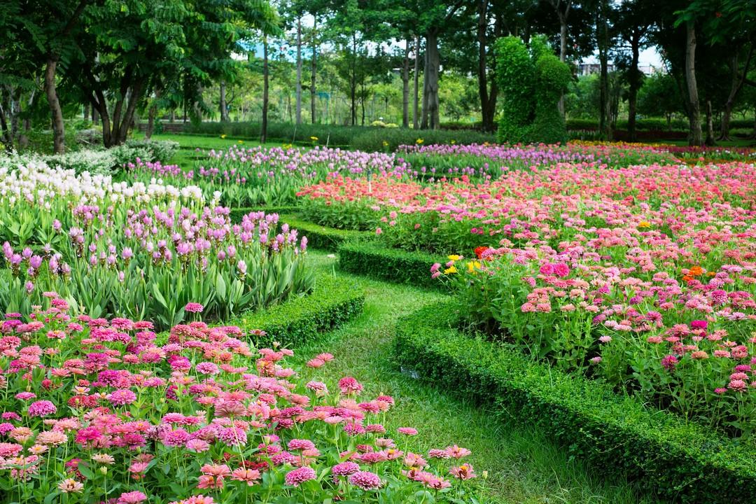 plantes bordure allées