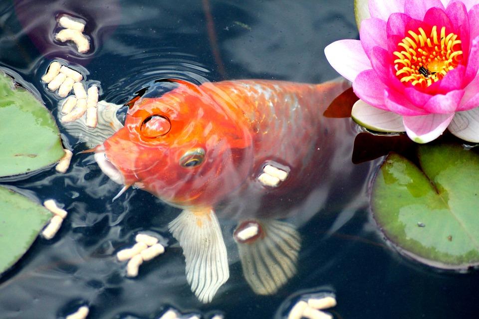 bassin poisson