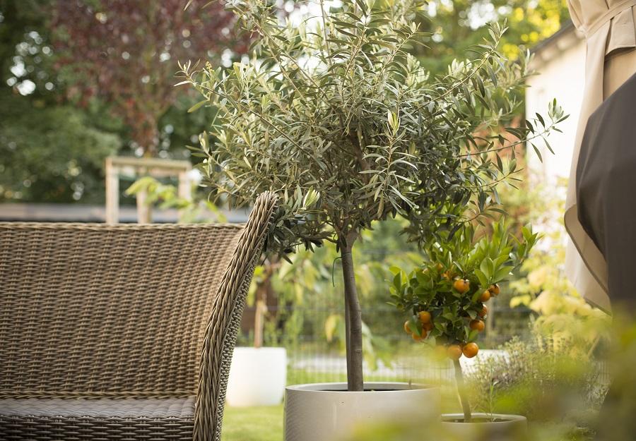 aménagement jardin provençal