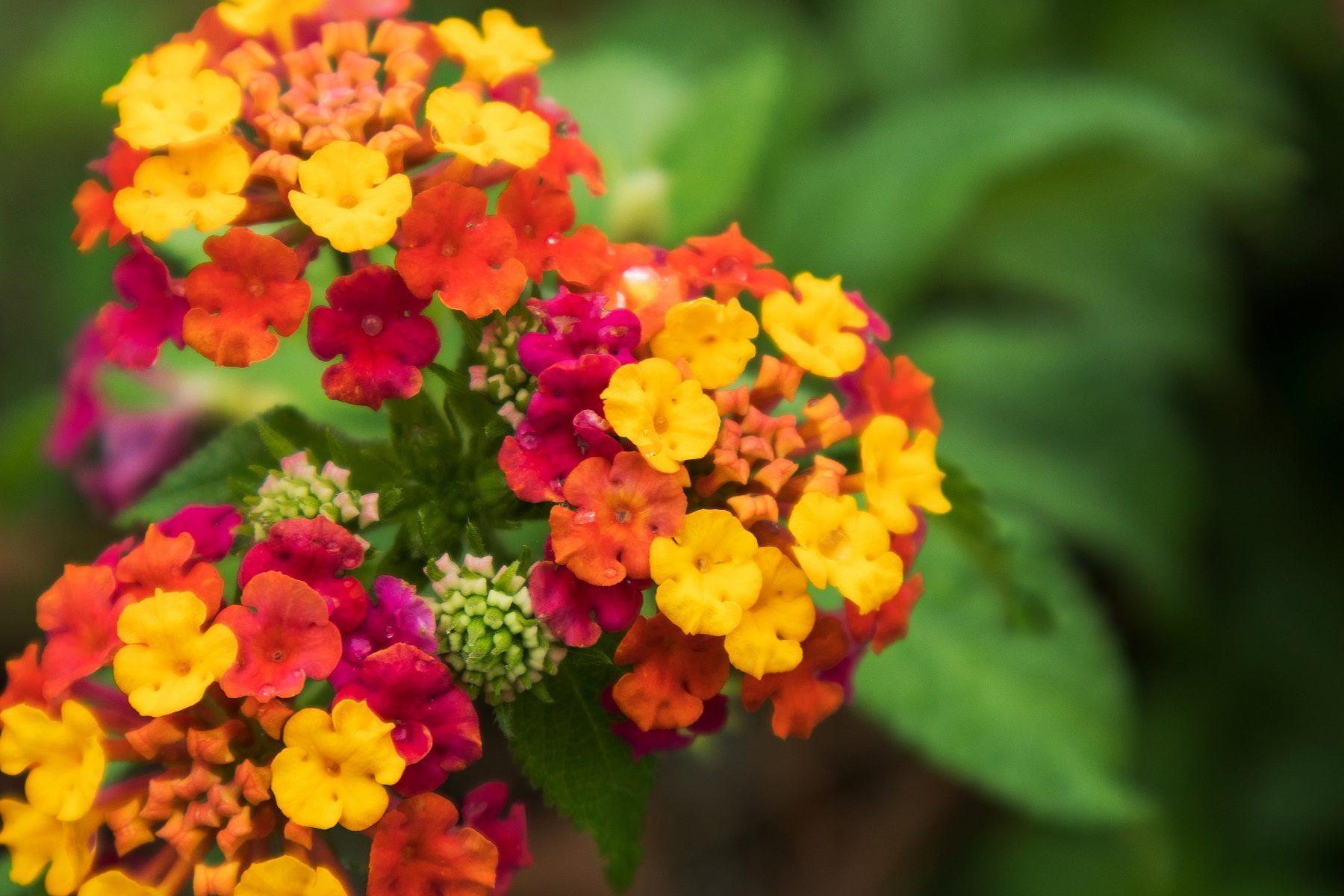 plante résistante à la chaleur