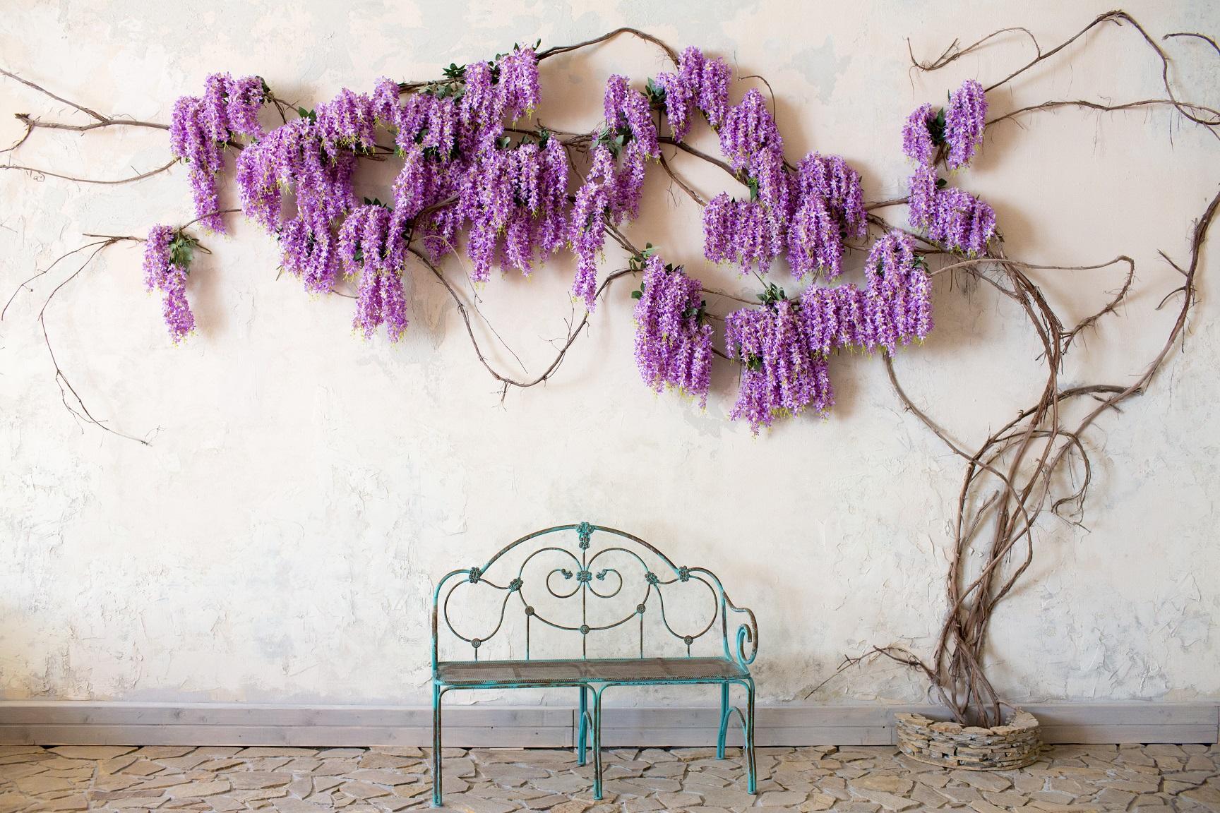 plantes grimpante mur provençal