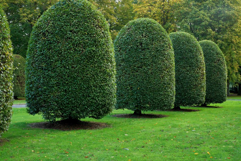 Taille architecturale des arbres
