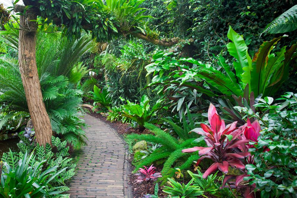Plantes tropicales jardin méditerranéen