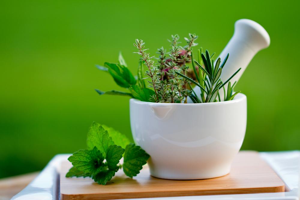 Plantes médicinales méditerranéennes